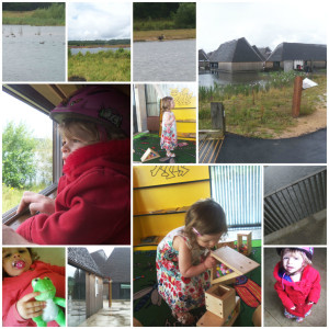 brockholes nature reserve, wildlife trust, birds, nature reserve, brockholes, preston, nature