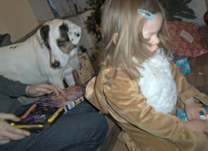 dog and chocolate, chocolate selection box, christmas, dogs