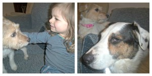 jack russell, border collie cross dalmatian, children