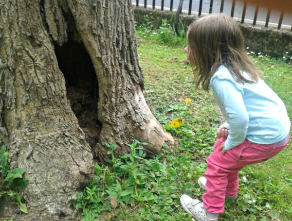 tree, home, hole in tree, children, tree house, tree home,